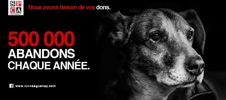 Un coup de patte pour la SPCA Saguenay